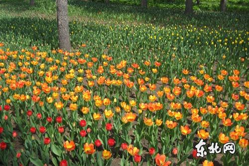 药用植物园,春园,剪型树木园,郁金香园,珍稀濒危植物园,秋叶冬景园,百