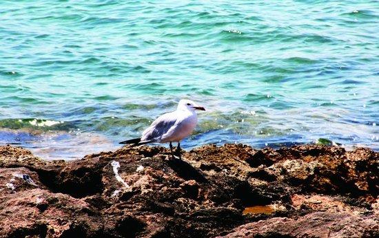 弄潮正当时 小王子在伊比萨岛肆意流浪