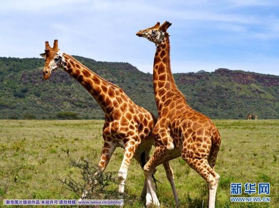 生动物保护区(4)
